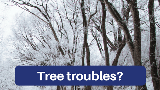 Trees covered with snow and ice, with the words Tree Troubles?